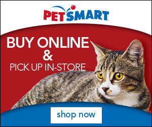 FlexOffers.com, affiliate, marketing, sales, promotional, discount, savings, deals, bargain, banner, blog, National Cat Day Deals, National Cat Day, cats, Only Natural Pet, PetSmart, PetCareRx, Petplan, Groupon, Pure Pet Food, food, pets, medicine