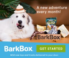 FlexOffers.com, affiliate, marketing, sales, promotional, discount, savings, deals, bargain, banner, blog, National Puppy Day Discounts, National Puppy Day, puppy, dog, pets, BarkBox, subscription, Tile, tech, Bluetooth, tracker, thoughtfully.com, gifts, gift sets, PetCareRx, medicine, Dog.com, Kohls Department Stores Inc, department stores