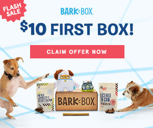 Fetching National Puppy Day Offers - FlexOffers com Blog