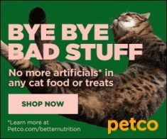 FlexOffers.com, affiliate, marketing, sales, promotional, discount, savings, deals, bargain, National Cat Day, PETCO Animal Supplies, Chewy.com, Rover Petcare, VetPet Box, EPRX.com, N8 Essentials, cat food, cat treats, Halloween costume, cat sitter, toys, treats, medicine, prescription, cat,